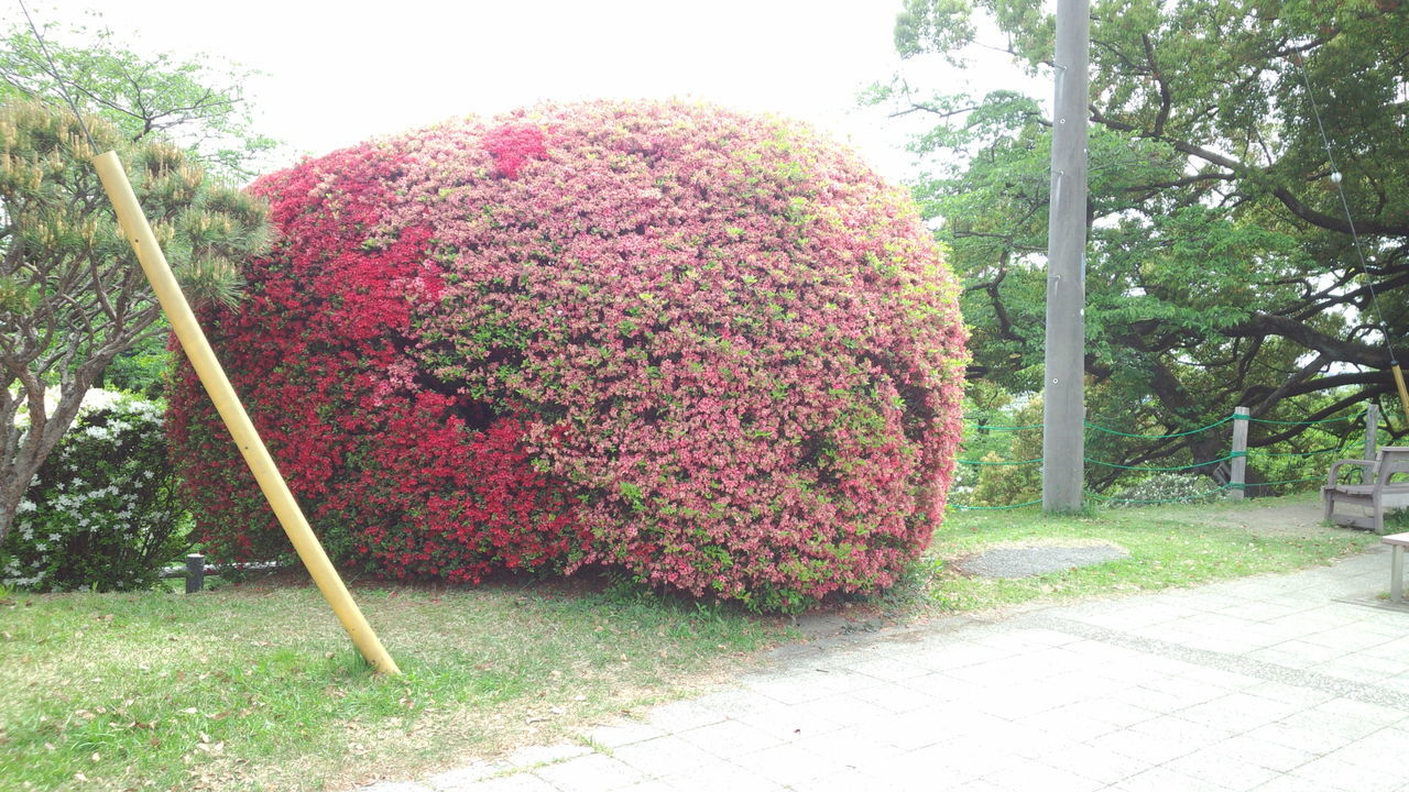 No People Flower Flower Ball Tsutsuji