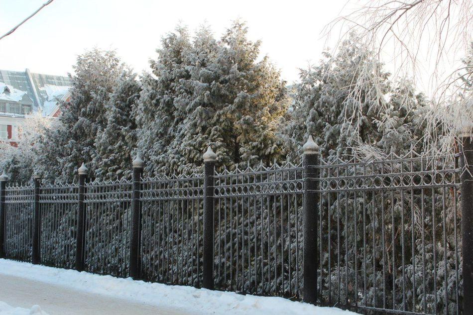 Cold Temperature Perm Snow Tree Winter Пгу Пермь