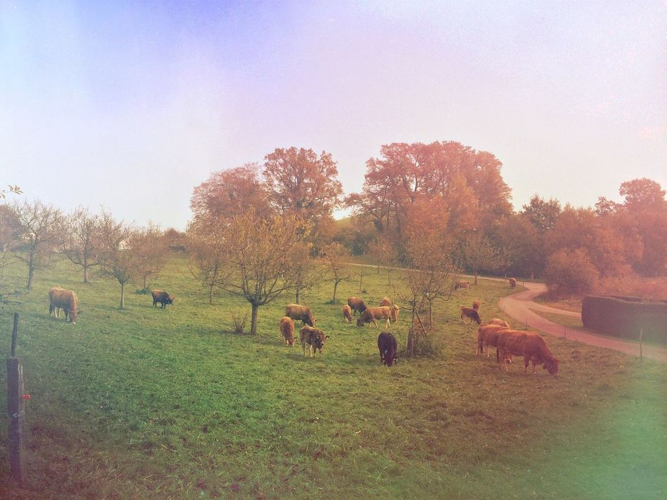 Hear the cowbells Mexturesapp Landscape_Collection Eyem Nature Lover Streamzoofamily