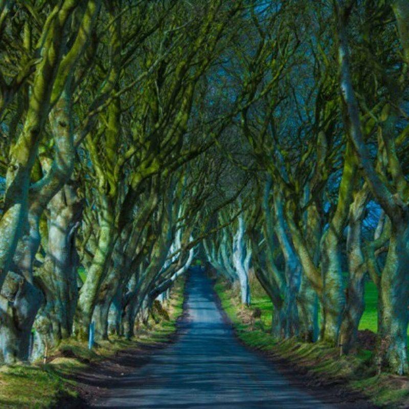 Northernireland DarkHedges Gameofthrones Photography scary eerie tree treeporn nikond7100