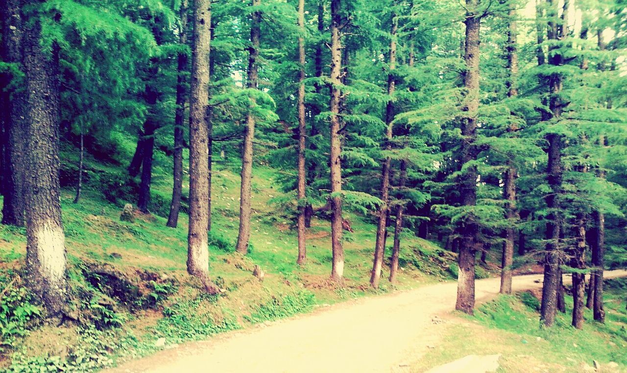THE ROAD NOT TAKEN Mountain Road Natural Beauty Naturephotography Pine Trees Showcase June