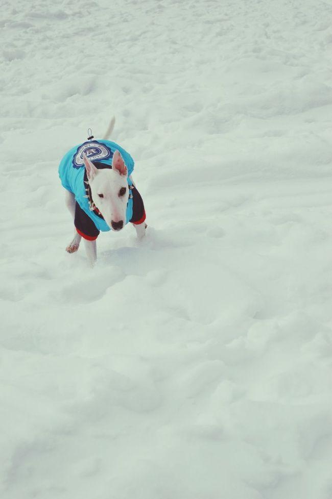 A Dog's Life Snow Time