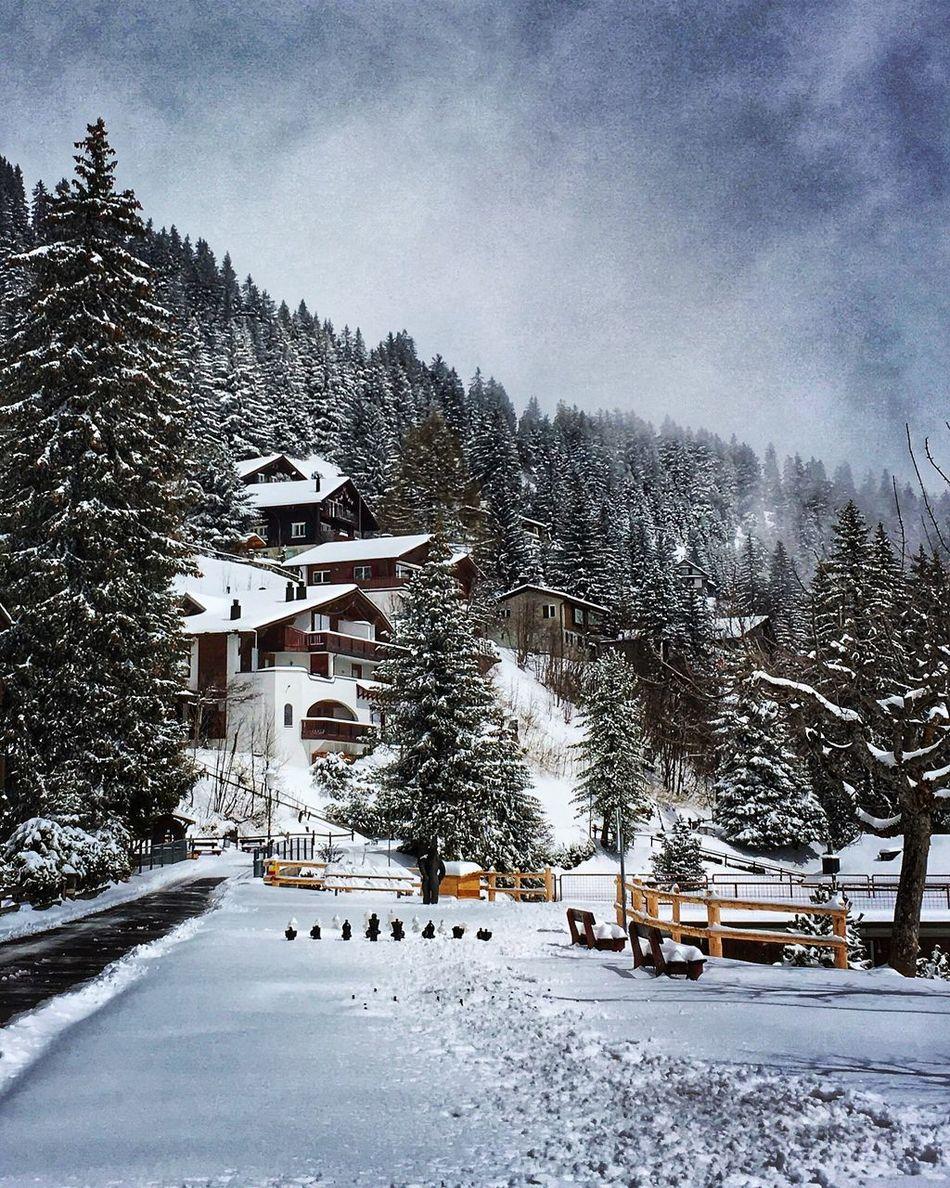 Snow landscape in Switzerland