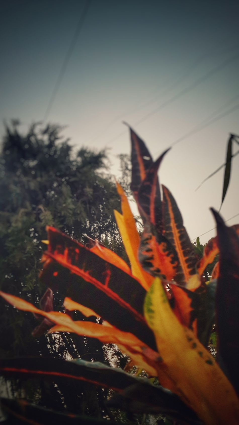 Outdoors No People Close-up Nature Day Beauty In Nature Trees And Bushes Red Leaves In Summertime Summer Memories 🌄 Early Morning Walk... EyeEmGalley Street Photography Freshness No Filter, No Edit, Just Photography Multi Coloured