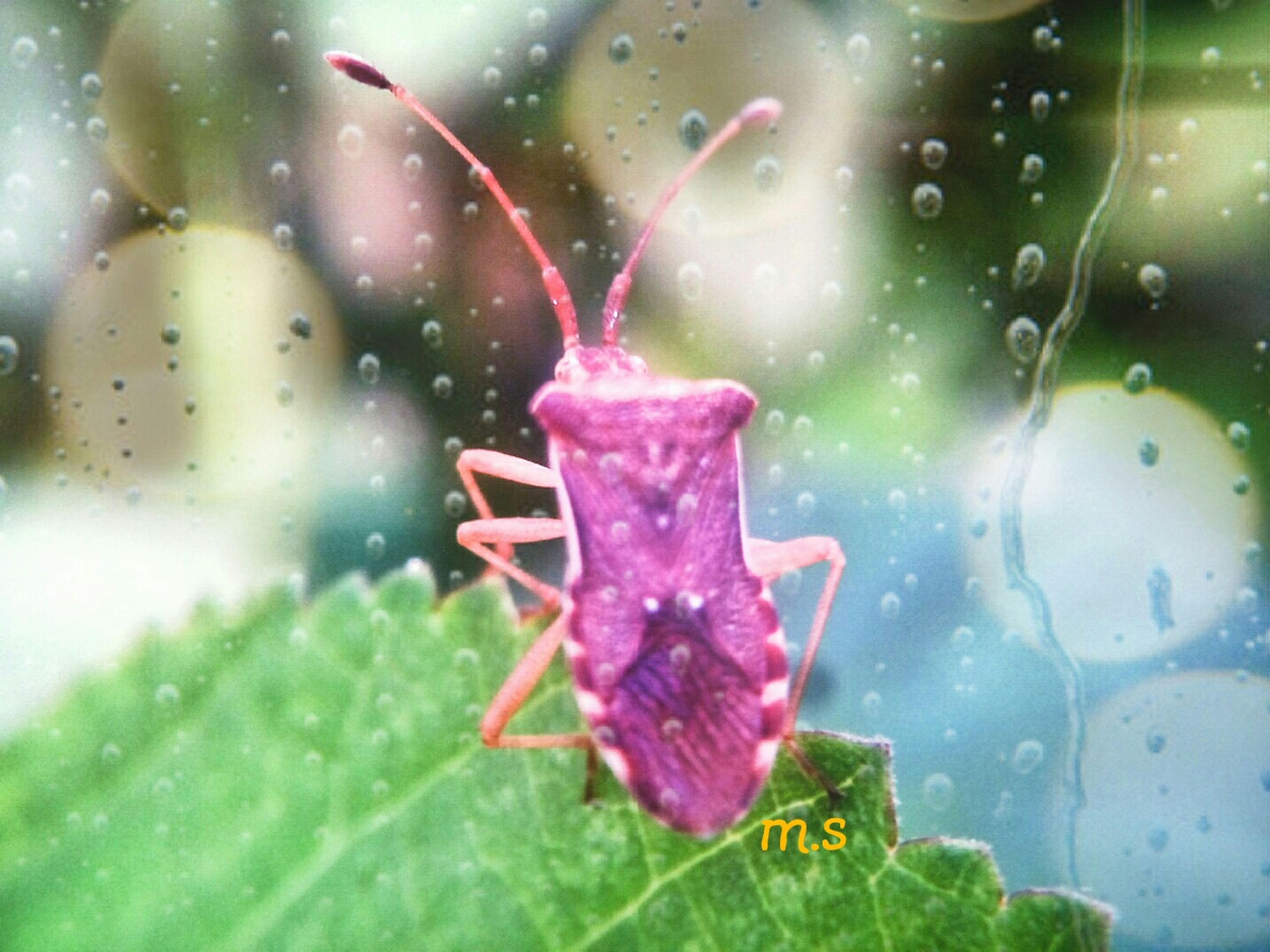 close-up, drop, water, wet, focus on foreground, red, pink color, leaf, flower, fragility, plant, freshness, transparent, green color, nature, growth, indoors, no people, day, glass - material