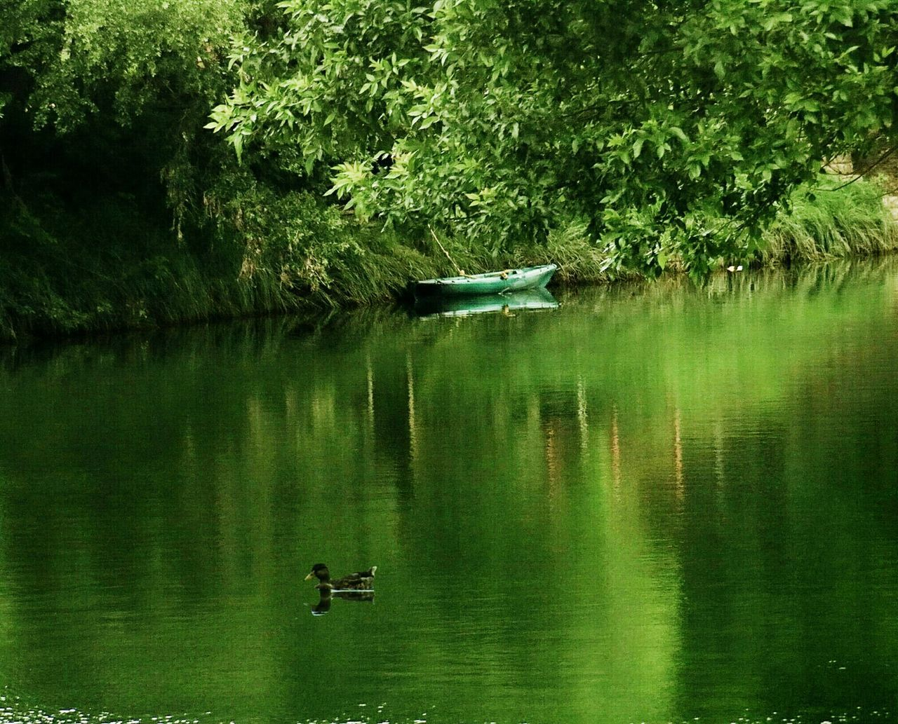 water, lake, reflection, nature, tree, nautical vessel, mode of transport, waterfront, transportation, beauty in nature, tranquility, outdoors, day, tranquil scene, one animal, animal themes, green color, floating on water, scenics, growth, no people, raft, animals in the wild, grass, swimming, bird