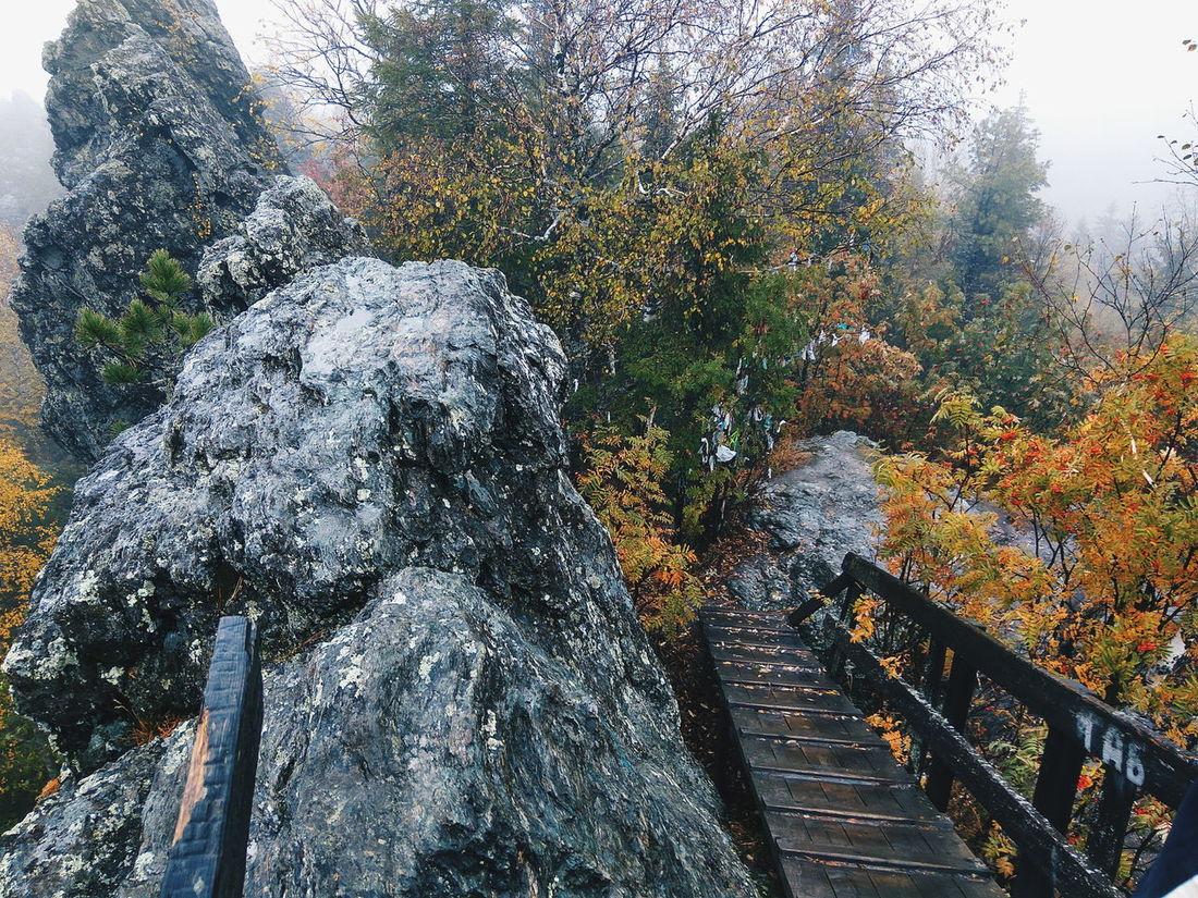 Tree Wet Nature Fog Stairs
