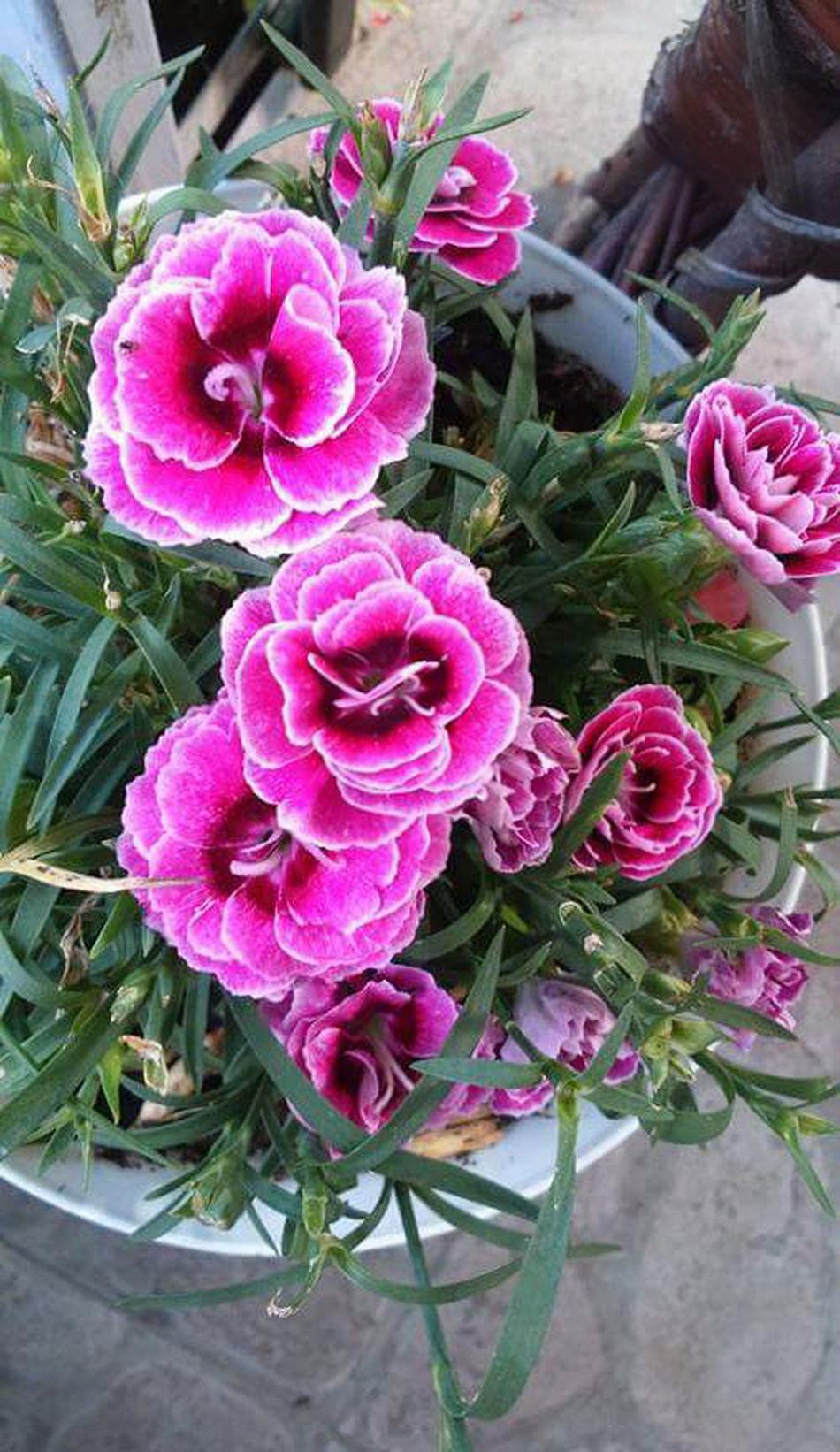 ☺Hiiiiii Pink Flower 🌸 Love♡ (no Filter)