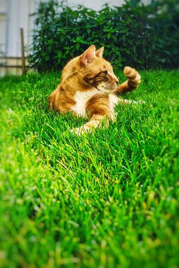 Friend cat grass relaxed EyeEmNewHere animal theme animal car outdoors Nature happiness