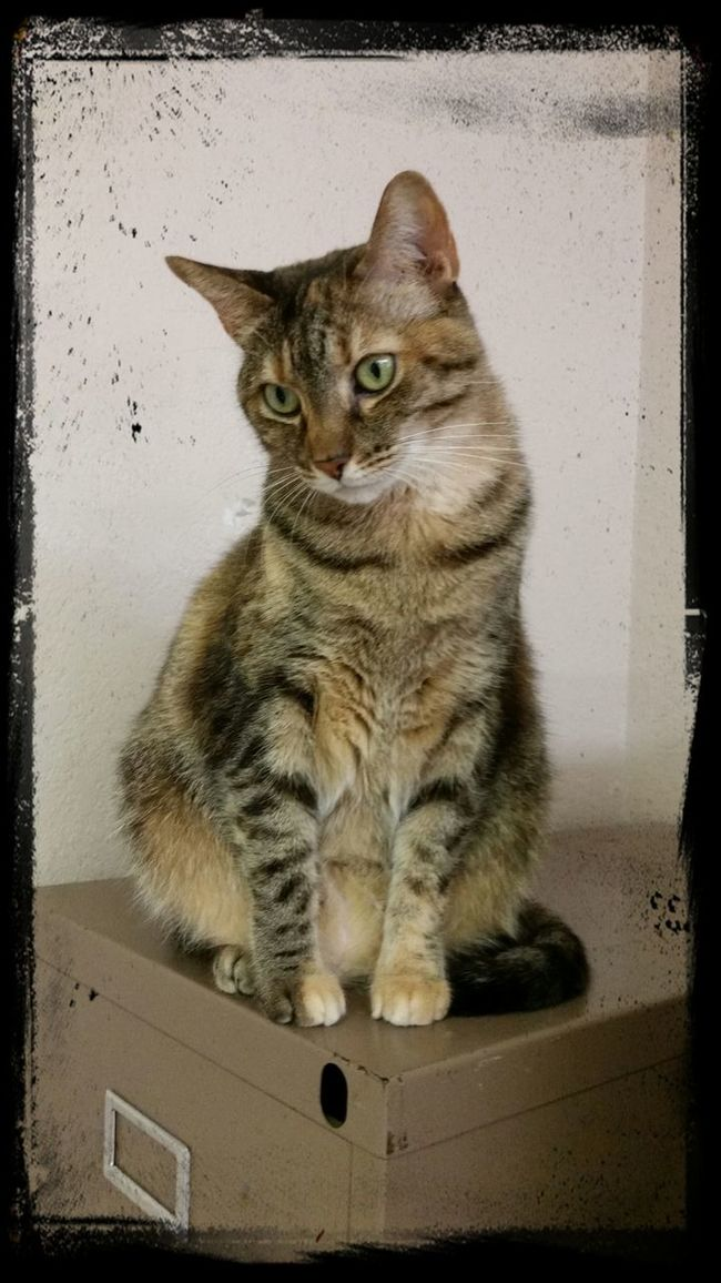 Spice wants a good home