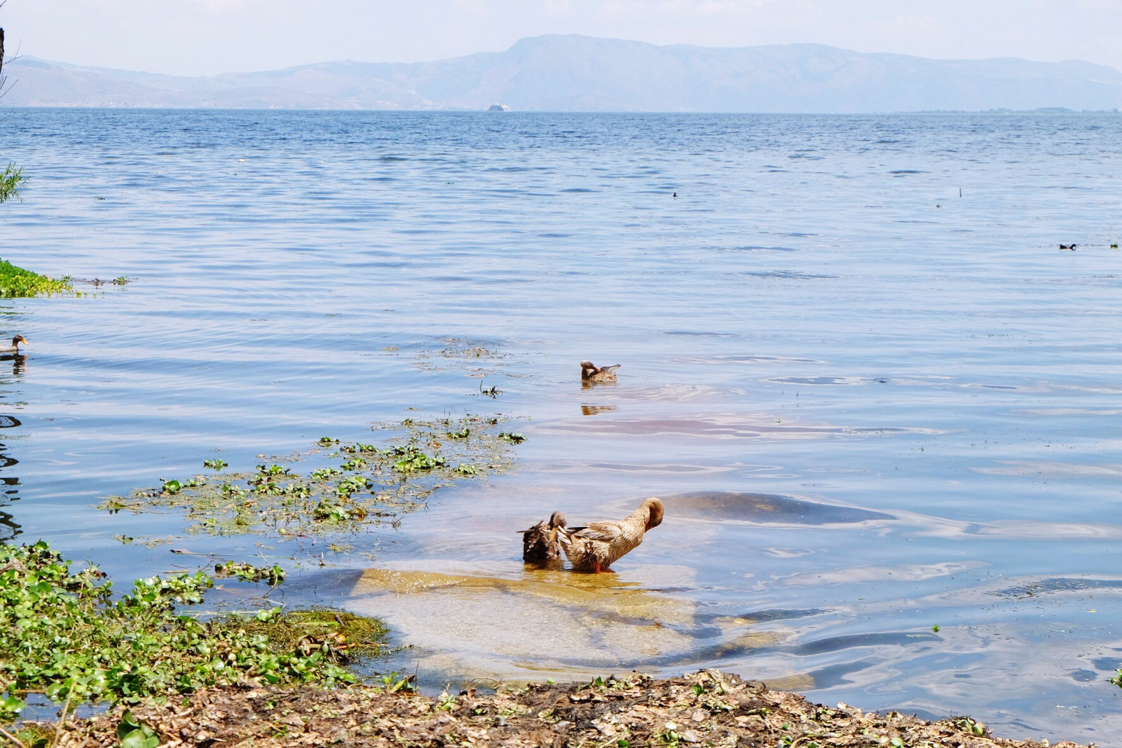 animal themes, water, one animal, animals in the wild, mammal, wildlife, lake, swimming, sea, dog, nature, tranquility, domestic animals, pets, tranquil scene, beauty in nature, scenics, bird, mountain, high angle view