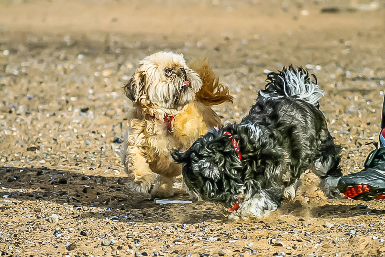 dog, pets, animal themes, domestic animals, animal, mammal, sunlight, no people, shih tzu, day, sitting, outdoors, nature