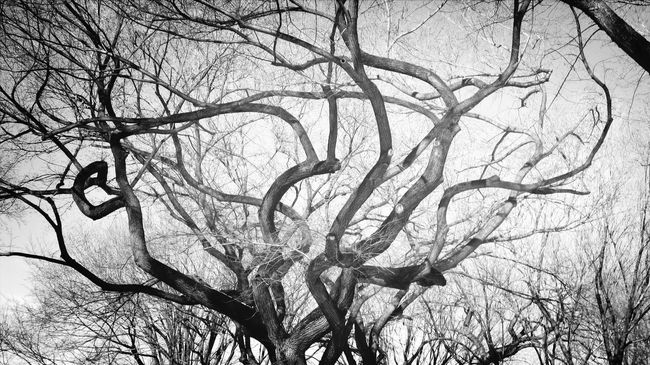 Hugging A Tree Synapse Tim Burton Blackandwhite Monochrome Light And Shadow