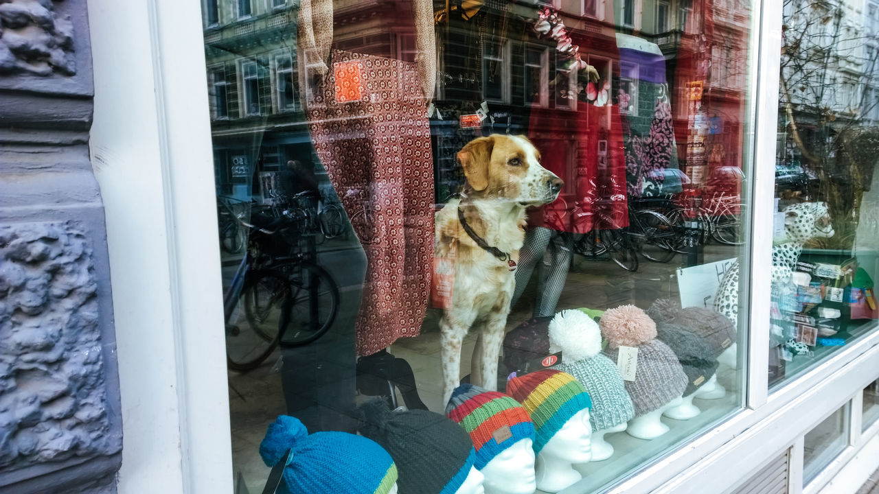 Animal Themes Architecture Building Exterior Built Structure Caps Day Dog Domestic Animals Mammal Observe One Animal Outdoors Pets Point Of View Reflections Shopping Store Streetphotography View Out Of The Window Window Adapted To The City