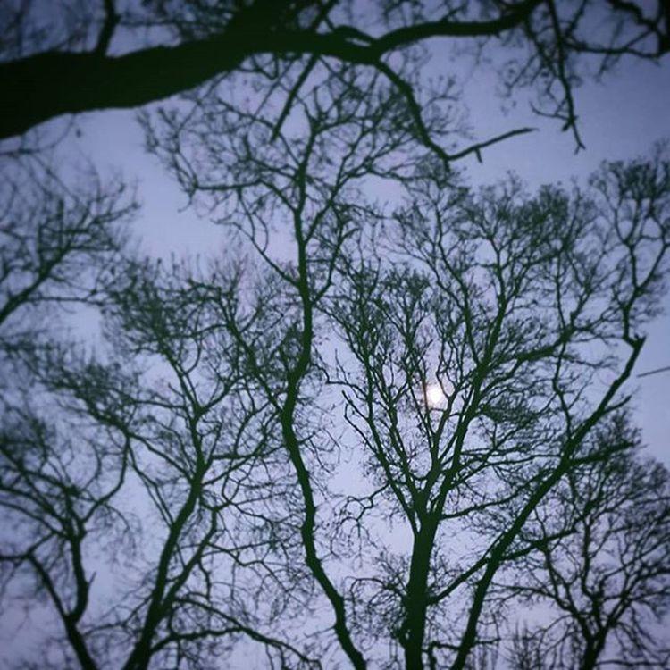 спокойнойНочи Goodnight and Sweetdreams  BuonaNotte e Sognidoro 😙😘😙😴😴😴 Kherson Night Moon Trees Theworldinpics Insta
