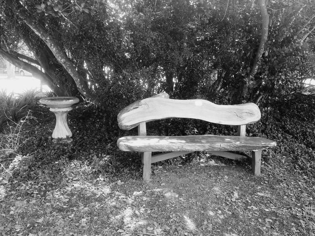 B&w Bench Cementworks Trees Garden Photography Empty Wood Bench Blackandwhite Photography
