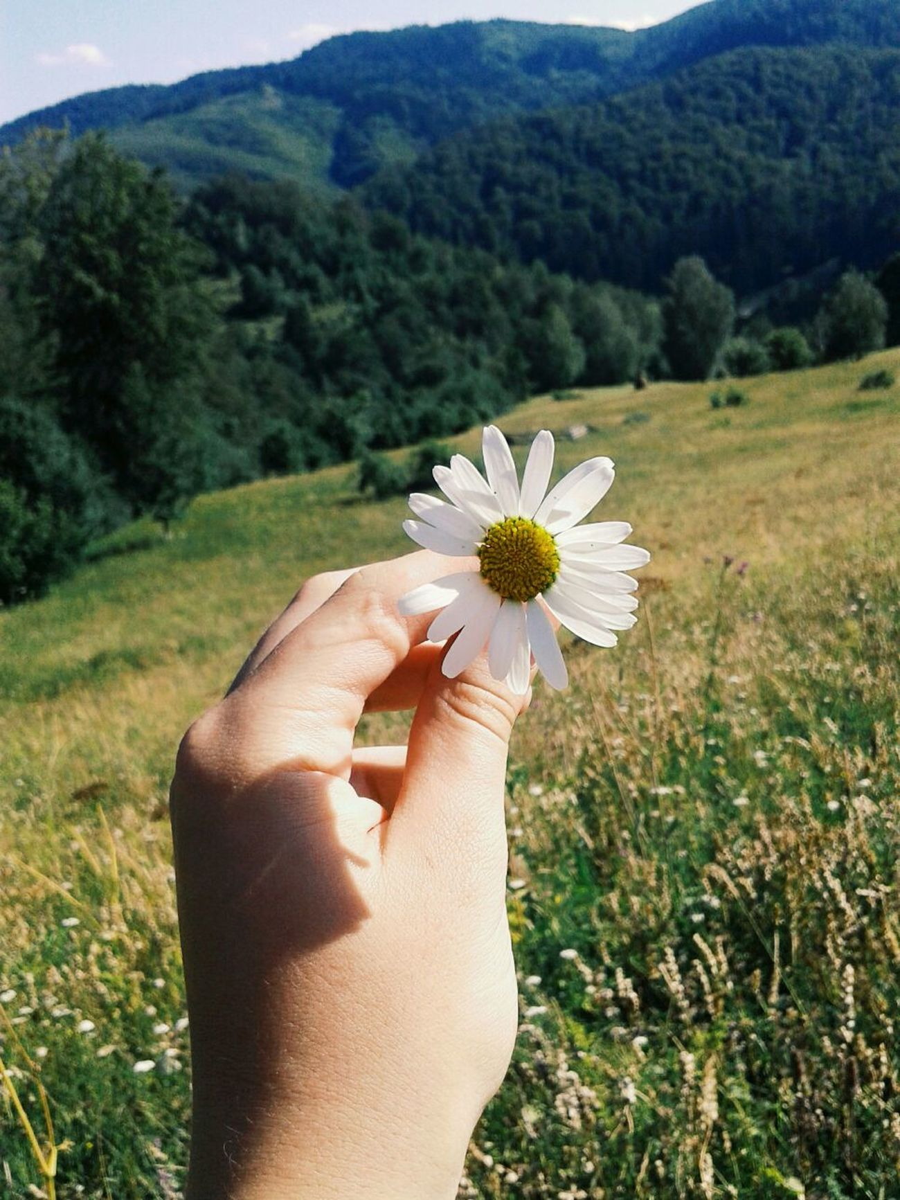 Flower Human Hand One Person Personal Perspective Nature Beauty In Nature Mountain Day Fragility People Flower Head Springtime Ispirations Skyline Romania Beauty In Nature Uncultivated Trees Nature No People