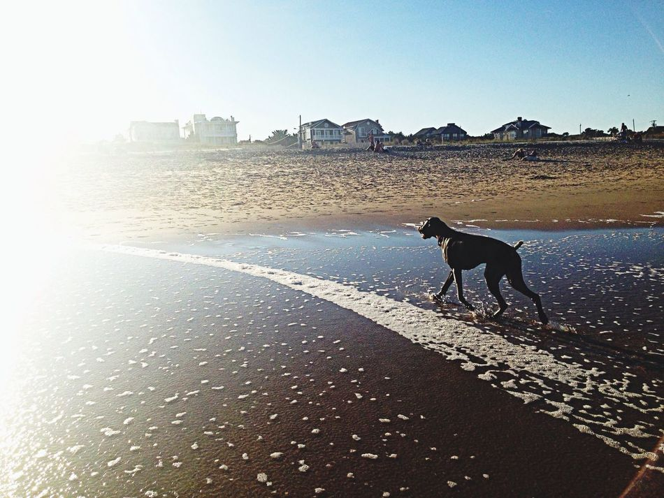 Special Memory: My favorite puppy in the world visits the ocean for the first time in Rehoboth Beach Delaware First Eyeem Photo
