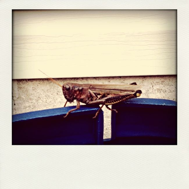 This little (big actually) guy was on my seat! Bug Creepy