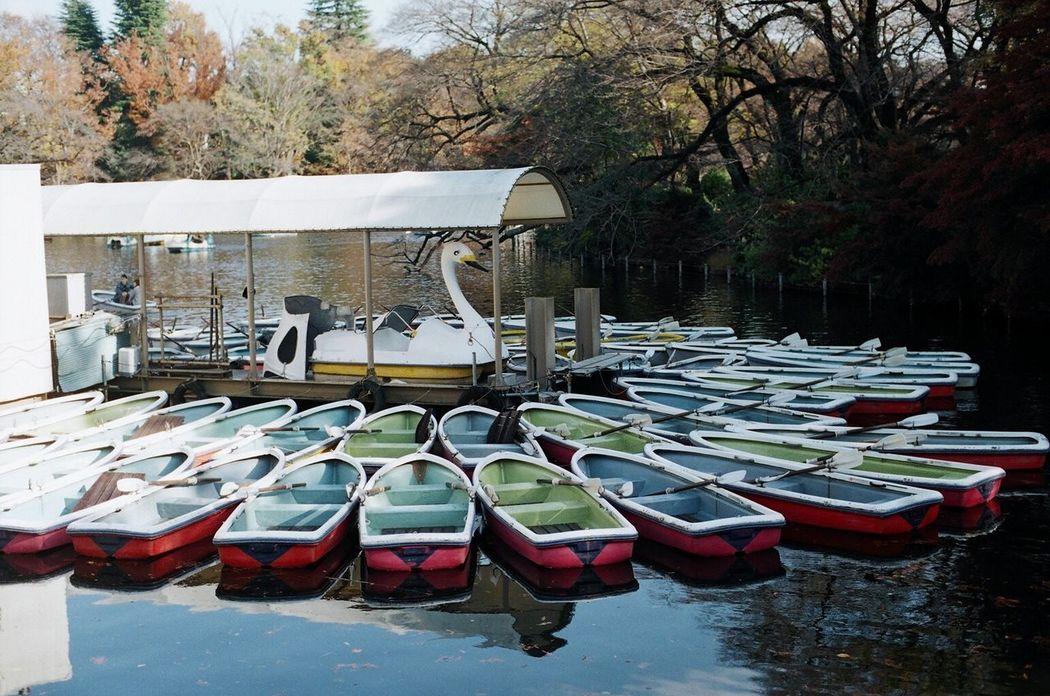 Nikon Nikon F2 Kodak Ultramax400 Film Filmcamera Filmphotography Film Photography Analog Analogue Photography フィルム フィルム写真 In A Row Tree Outdoors Day No People Large Group Of Objects Pedal Boat Water Nature