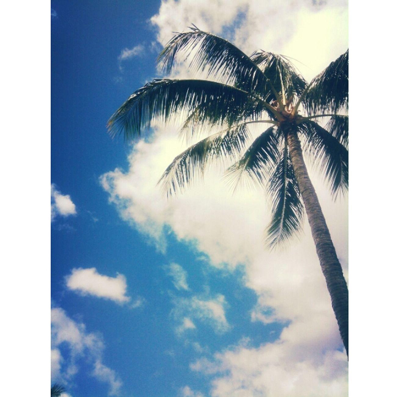 Hawaii⍥⃝ Enjoying Life Beach Life Beauty