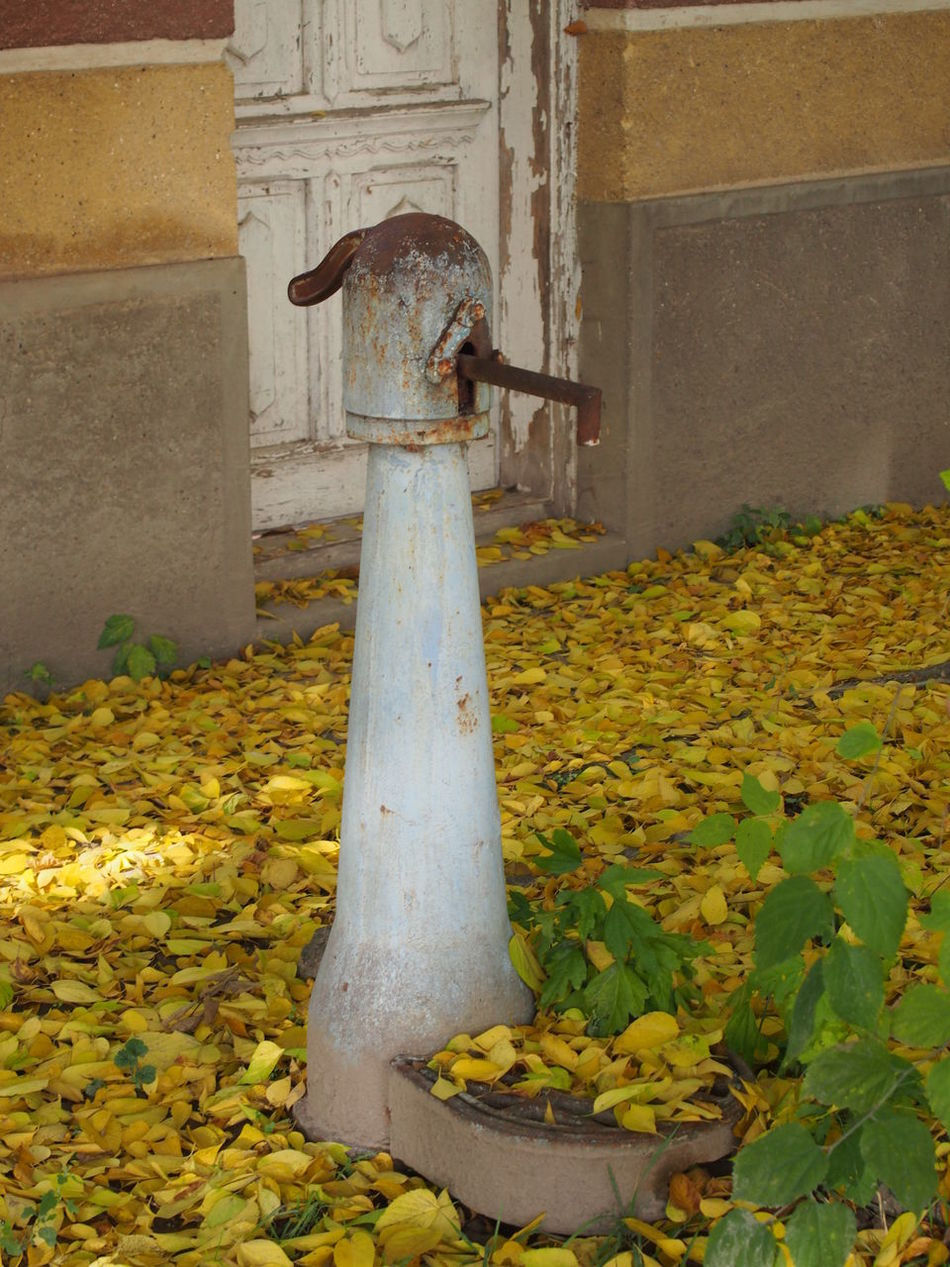 Autumn Day Fountain Leaf Madocsa Nature No People Outdoors Pump Village Village Life Water Yellow