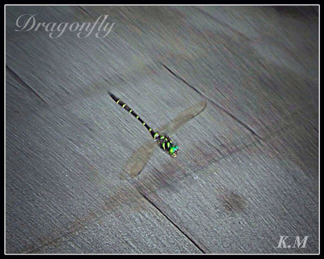 The panning of a dragonfly. トンボの流し撮り Imari Eye Em Around The World Insect 勝トンボ
