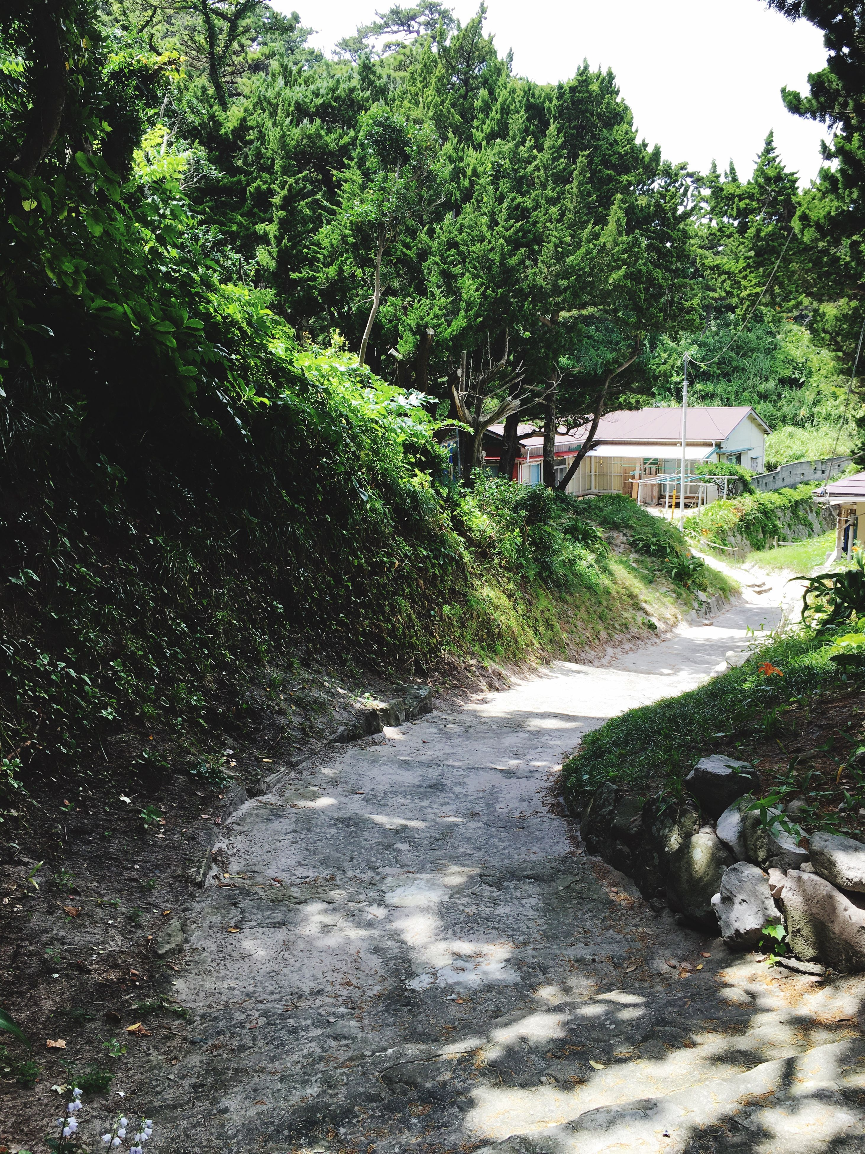 tree, growth, green color, nature, the way forward, tranquility, tranquil scene, beauty in nature, plant, scenics, day, outdoors, footpath, lush foliage, no people, non-urban scene, diminishing perspective, non urban scene, idyllic, landscape, flowing water, green, narrow, grass, remote, vanishing point