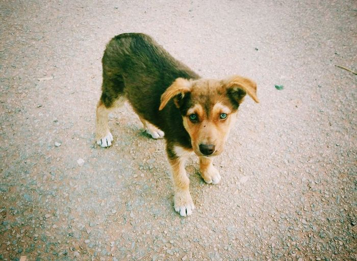 Beautiful encounter😍 🐕Puppy Puppies Dog Dogs Shootermag Streetphotography Vscocam VSCO Mobilephotography