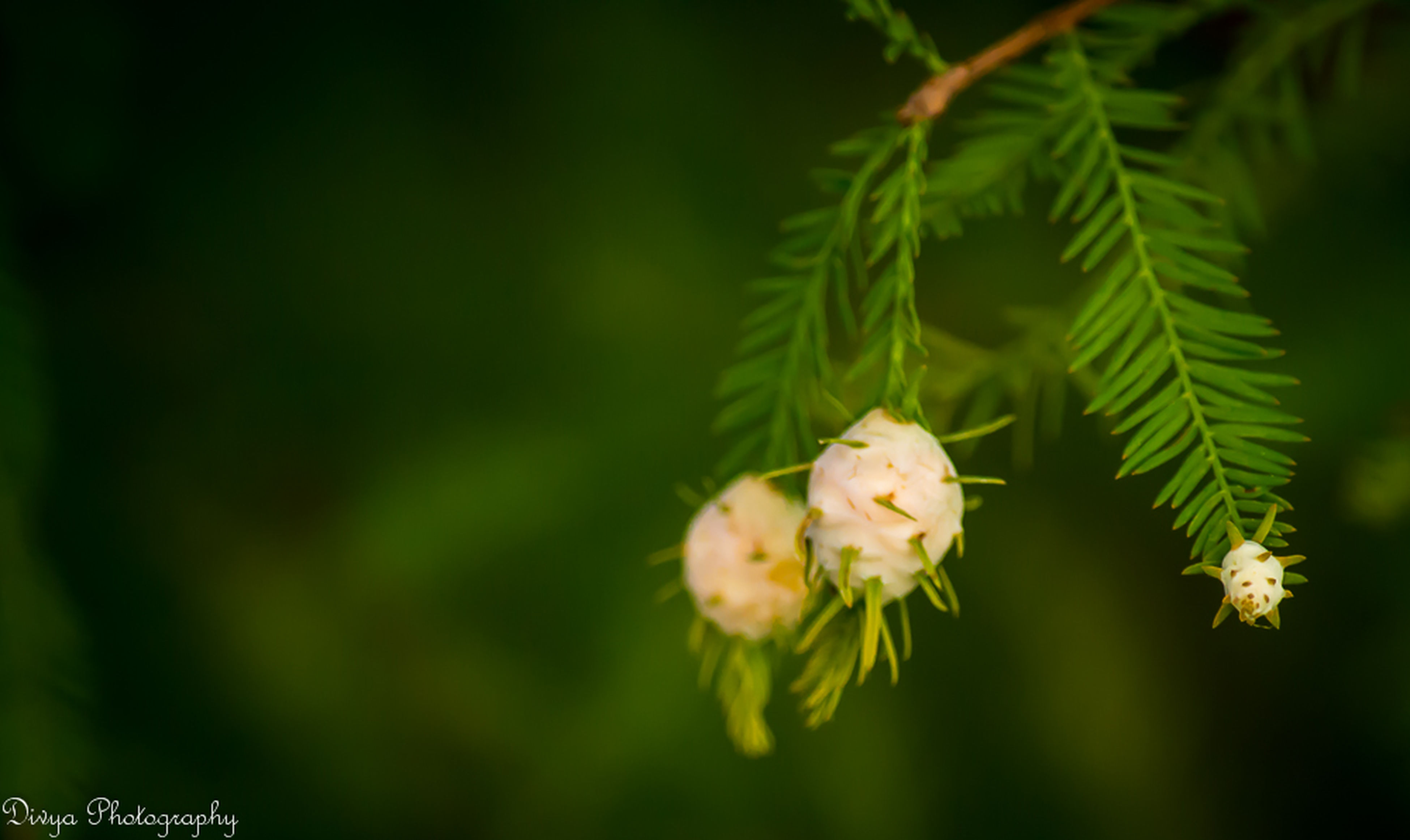 flower, growth, freshness, fragility, petal, focus on foreground, flower head, beauty in nature, close-up, white color, nature, blooming, plant, in bloom, park - man made space, blossom, selective focus, outdoors, botany, stem