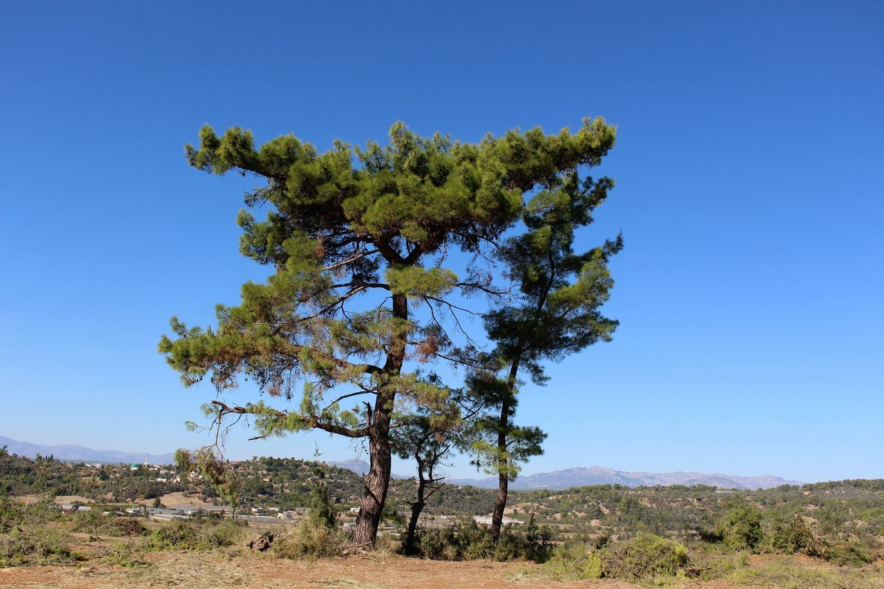 jeep safari Beauty In Nature Blue Clear Sky Day Ecosystem  Landscape Mountain Nature No People Outdoors Pinaceae Pine Tree Pine Wood Pine Woodland Scenics Sky Tranquility Tree