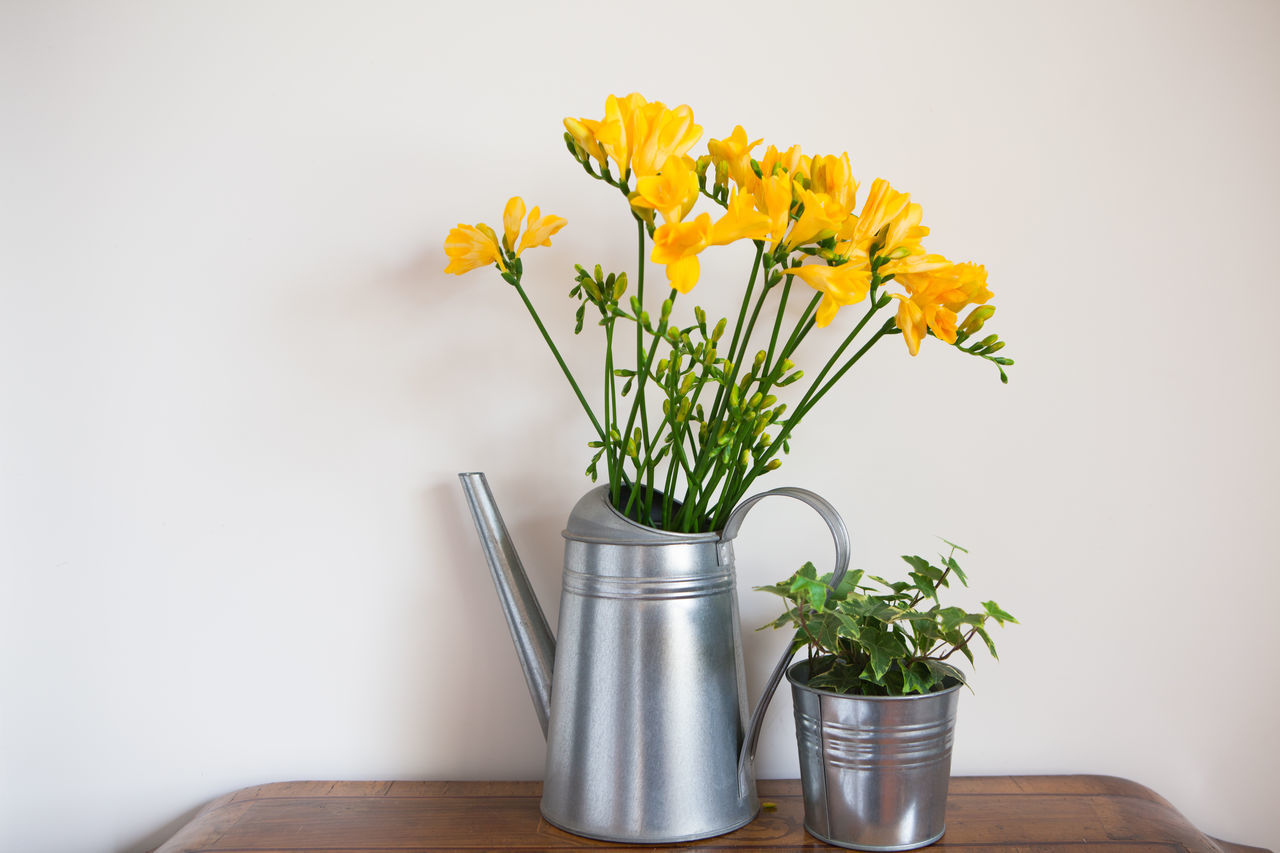 Beauty In Nature Blossom Bouquet Close-up Flower Flower Arrangement Flower Head Flower Pot Fragility Freesia Freshness Indoors  Ivy Nature No People Petal Plant Vase Yellow