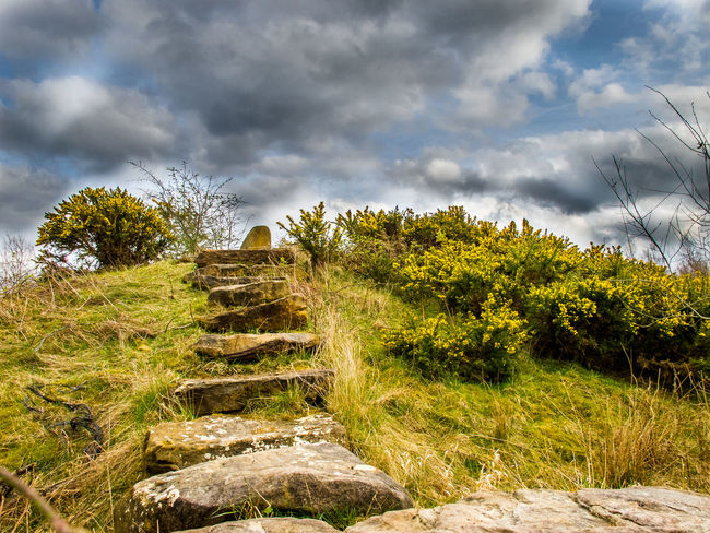 Beauty In Nature Cloud - Sky Cloudy Damaged Day Destruction Footpath Grass Green Color Growth Messy Nature No People Outdoors Ruined Rural Scene Scenics Sky Staircase Steps The Past The Way Forward Tranquil Scene Tranquility Tree