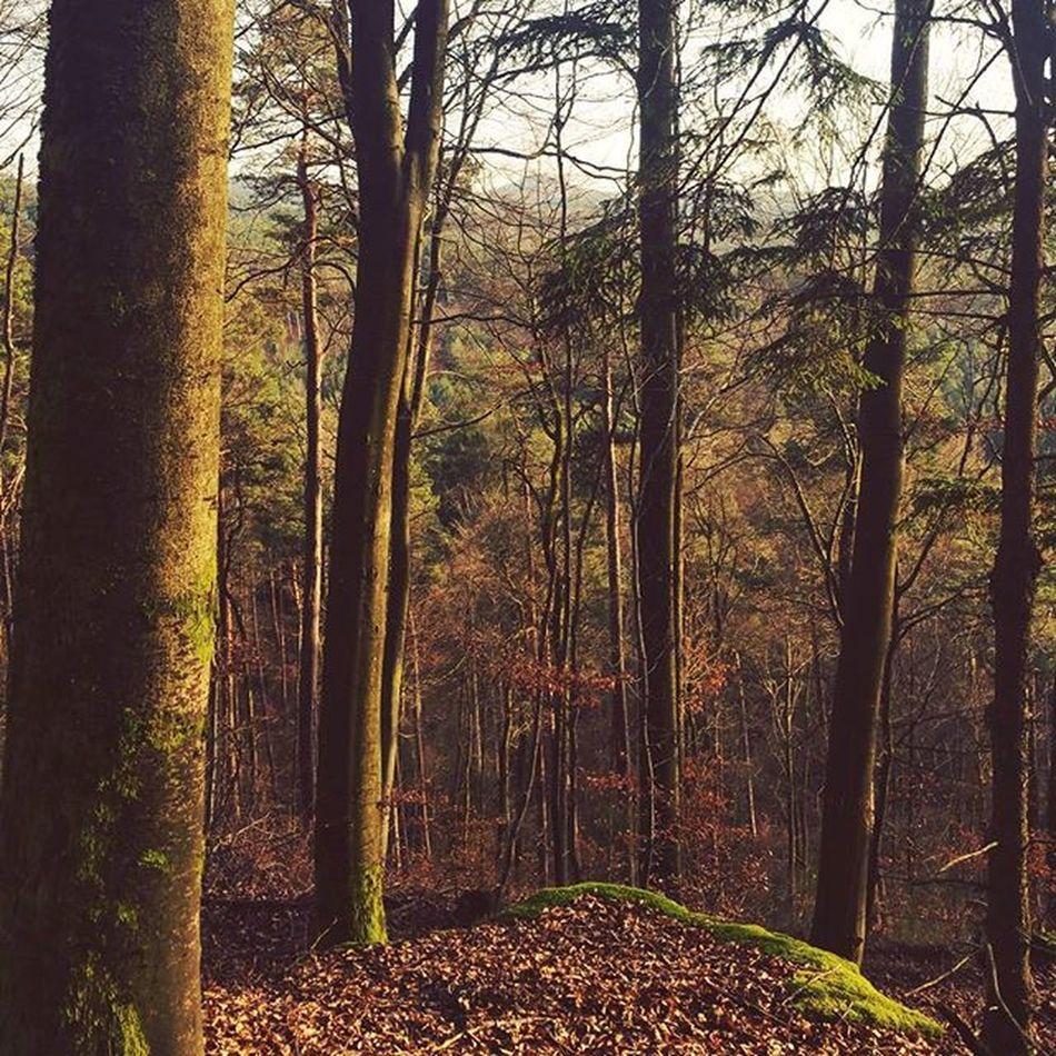 Forest Trees Outdoors Socalledwinter Sunnyday December Nowinter Springindecember Germany Palatinate Palatinateforest Pfälzerwald