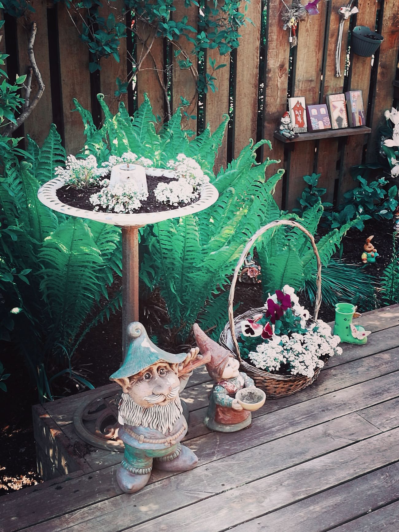 Adorable Garden Garden Photography Leprechauns Green Color Outdoors