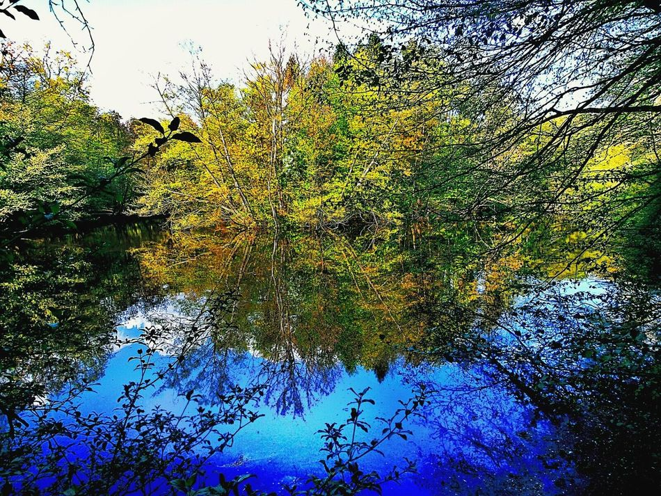 Too Much Nature for One Picture Green Island Cityforest All Shades Of Green Blue Lake Reflections On The Water Springcolors Beliebte Fotos In The Woods Nature The Great Outdoors With Adobe The Great Outdoors - 2016 EyeEm Awards Frankfurt Am Main Germany🇩🇪 The Essence Of Summer Nature's Diversities Hidden Gems  Colour Of Life
