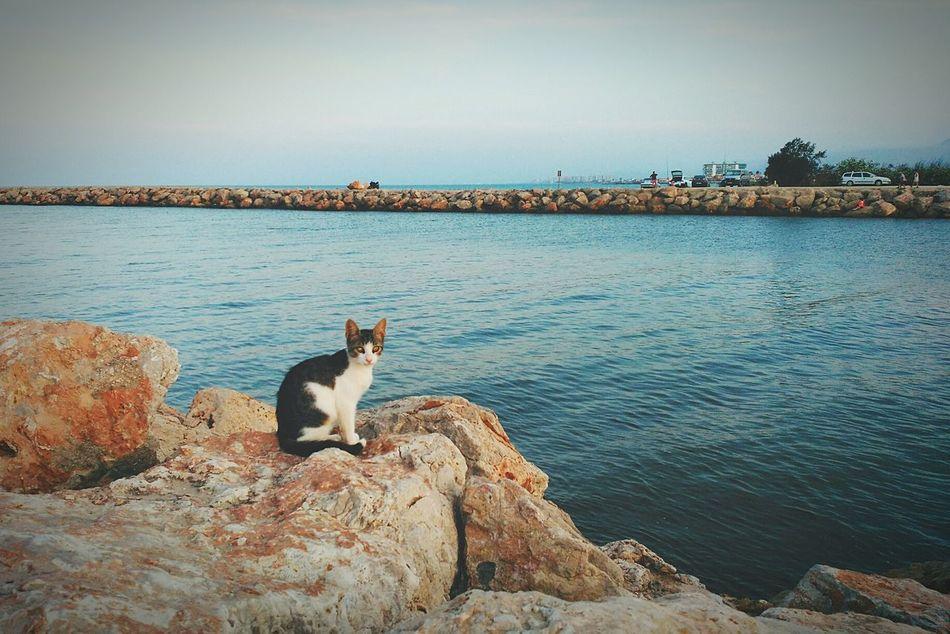 Cullera Cat Lovers