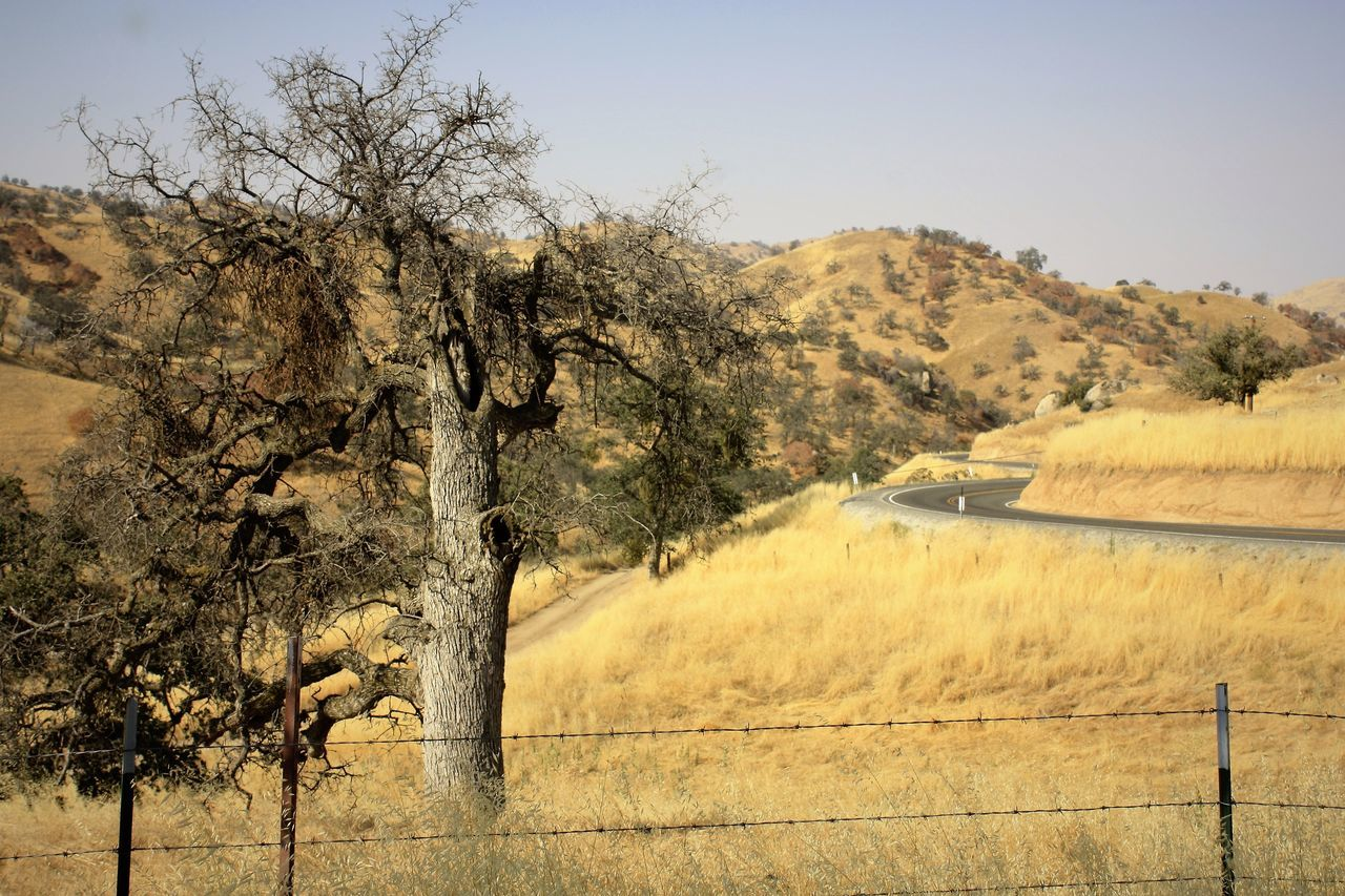 Peaceful back country drive through California Backroads Branch California Gold Landscape Nature No People Outdoors Scenics Tranquil Scene Tranquility Tree