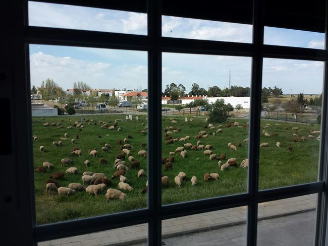 Viewfrommywindow Landscape EyeEm Nature Lover Sheeps