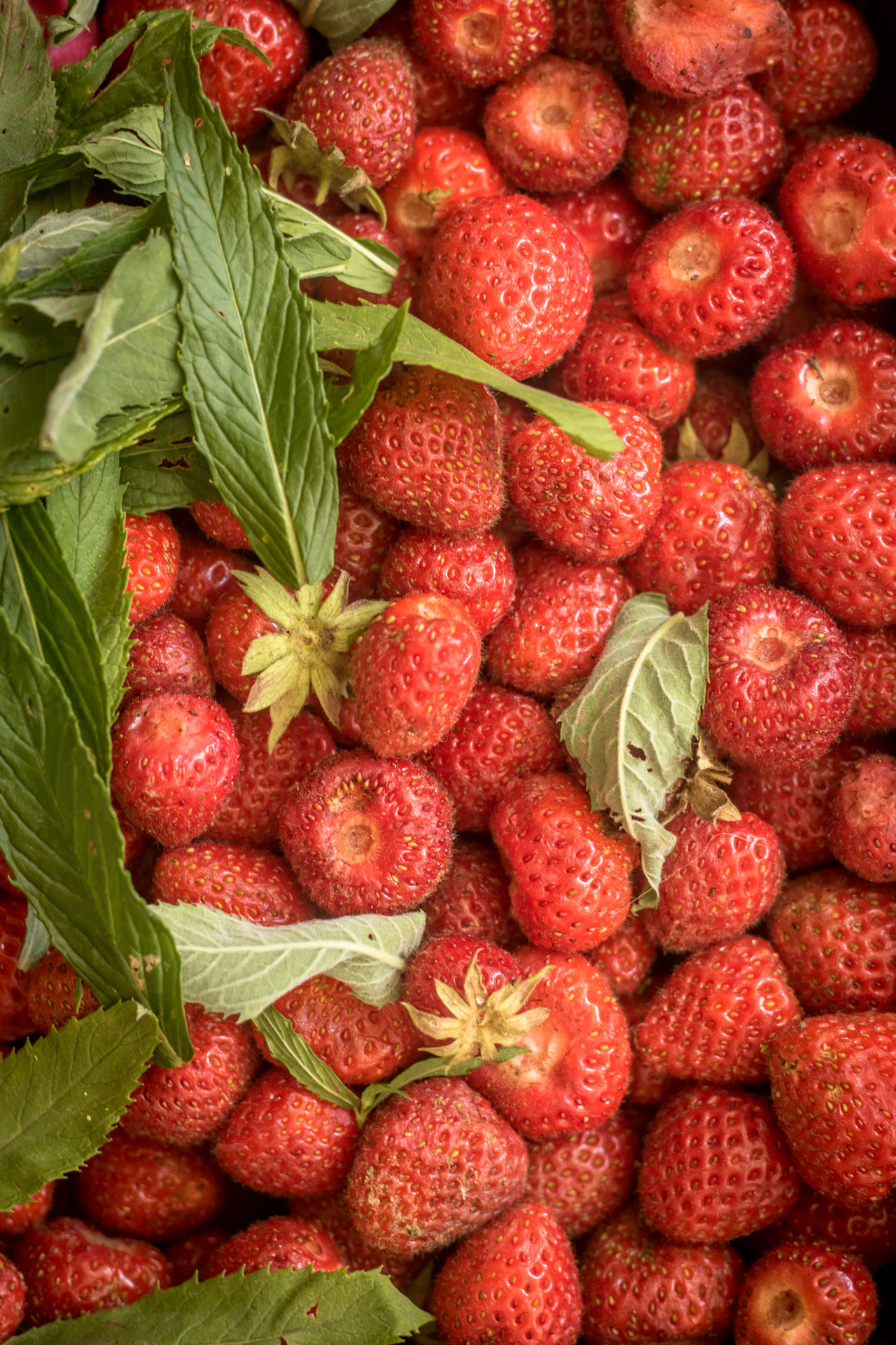 Background Close-up Day Food Food And Drink Freshness Fruit Full Frame Healthy Eating Large Group Of Objects Leaf Macro No People Outdoors Red Red Strawberries Strawberry