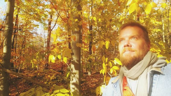 Hickory,Ash,Beech,Maple and Birch all glowing gold in the sun today💛💆💛 Smile Autumn Colors Forest Nature Tranquility EyeEm Nature Lover Peace And Quiet Soltitude Trees Shine Light ThatsMe Selfportrait Hello World Smile ✌
