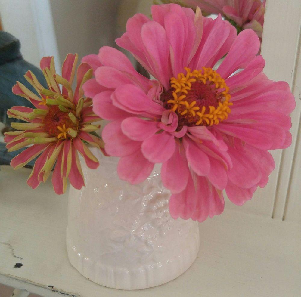 Pinks Pink Pink Flower Pink Color Indoors  Sunlight Vase Of Flowers Vase Art Vase Zinnias, Flowers White Vase Shabby Chic Shabby Look Shabbychichome