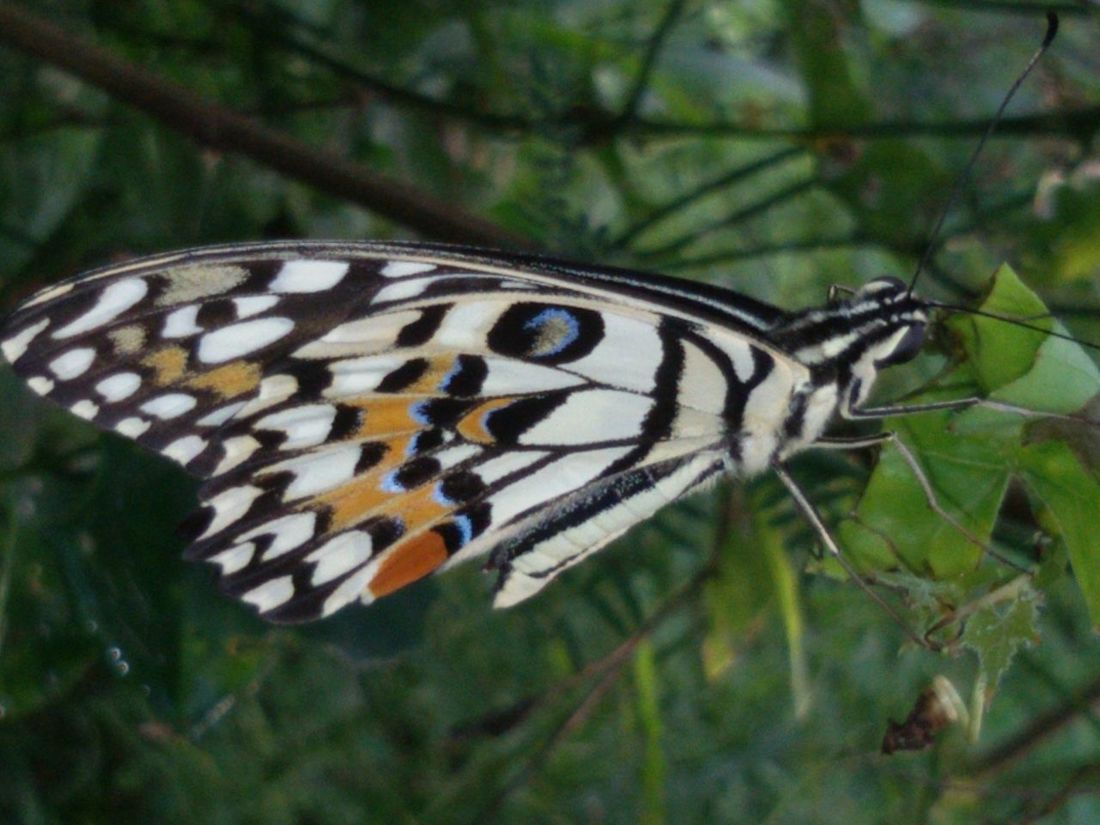 Animal In The Wild Animal Themes Animal Wing Beauty In Nature Butterfiy Insect Nature Nature One Animal Wildlife & Nature