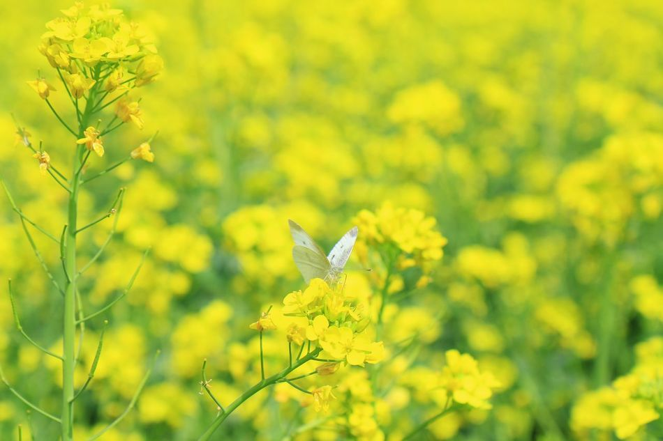 Animal Art Is Everywhere Beauty In Nature Botany Butterfly EyeEmNewHere Field First Eyeem Photo Flower Flower Head Fragility Getting Inspired Growth Hello World Insect Nature One Animal Outdoors Petal Plant Spring Taking Photos Tranquility Yellow Yellow Flower