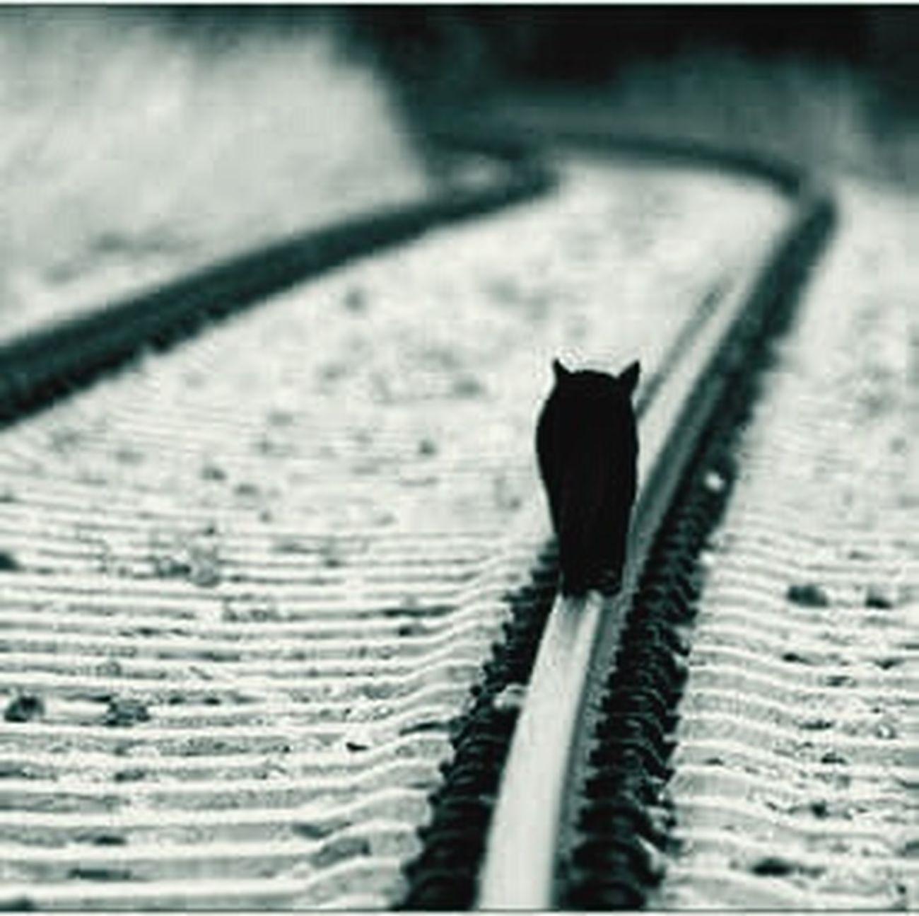 Animal Photography First Eyeem Photo Train Rails