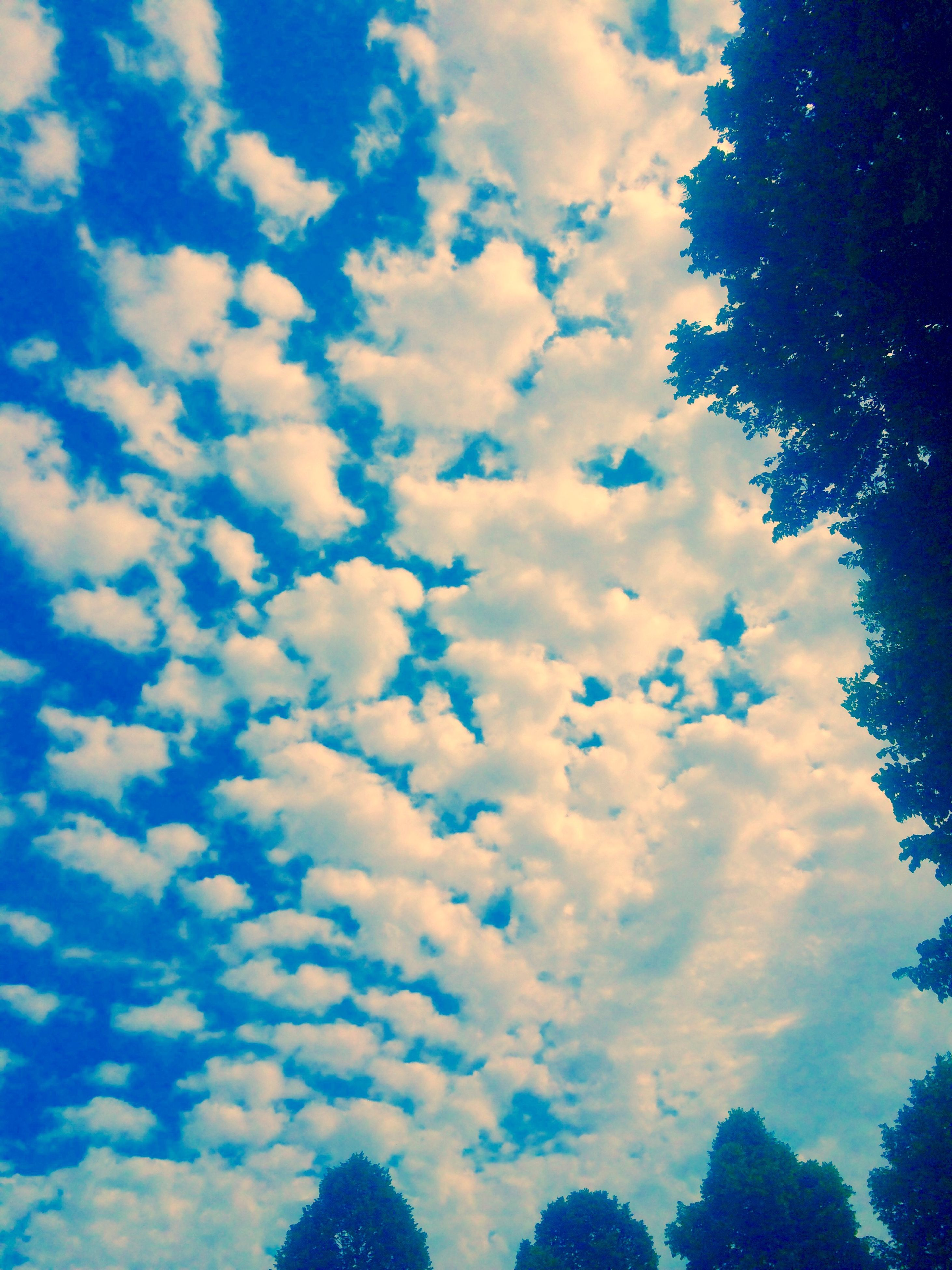 low angle view, sky, blue, beauty in nature, tranquility, cloud - sky, tree, scenics, nature, tranquil scene, cloud, cloudy, silhouette, idyllic, outdoors, growth, no people, cloudscape, day, sunlight