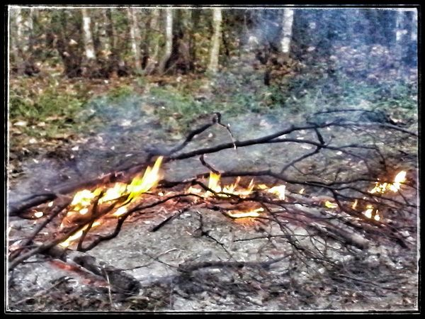 Fire Wood Burning In The Forest Ashes To Ashes