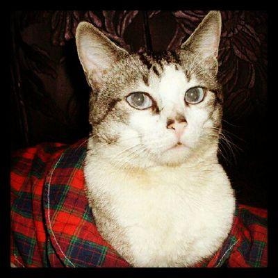 Gato Romão