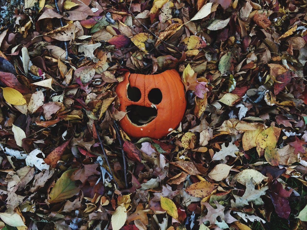 Leaf Dry Autumn Orange Color High Angle View Fallen Outdoors No People Close-up Nature Pumpkin Day Fragility Halloween Leaves Colors Spooky