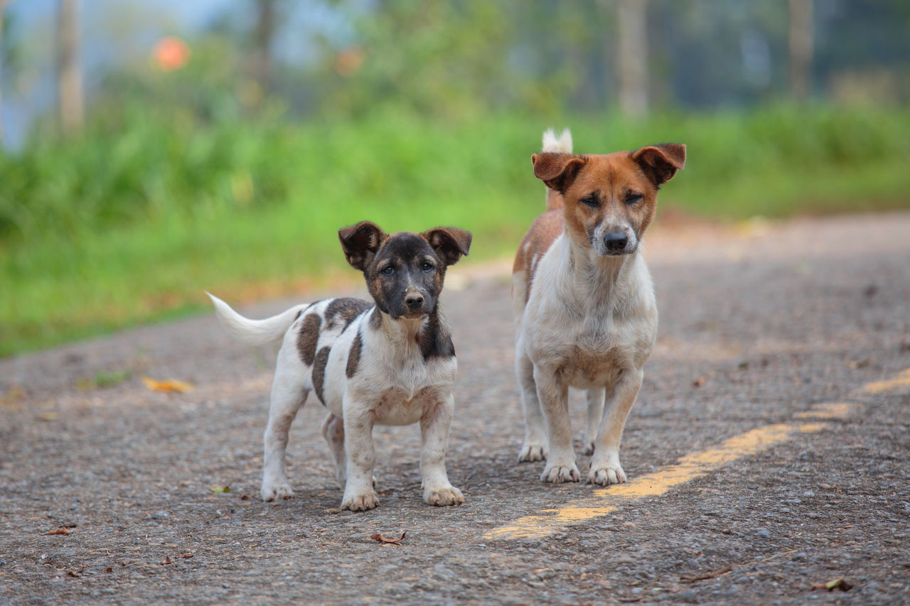 Portrait Of Dogs On Road
